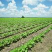 Job in Denmark in agriculture
