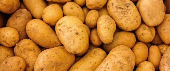Darbas Danijoje bulvių fabrike.
