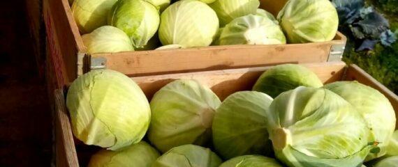 Darbas Danijoje 1 darbuotojui daržovių ūkyje